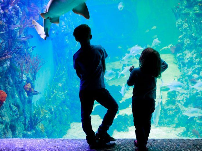 Kids at the Maui Aquarium looking at a fish tank