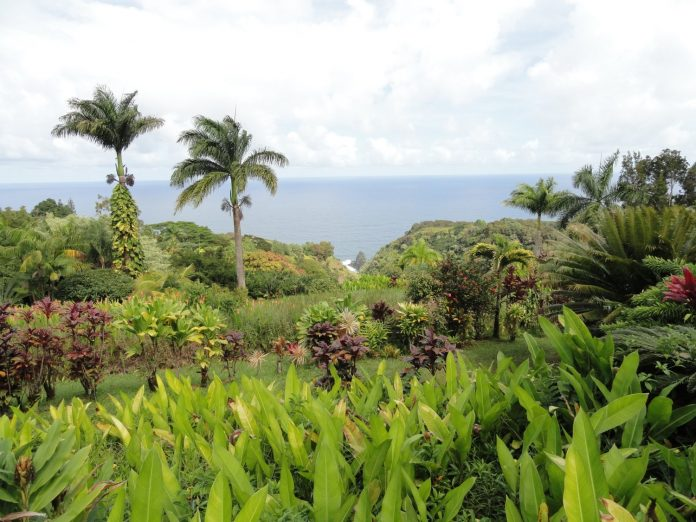 View of the Maui Garden of Eden with ocean in the distance