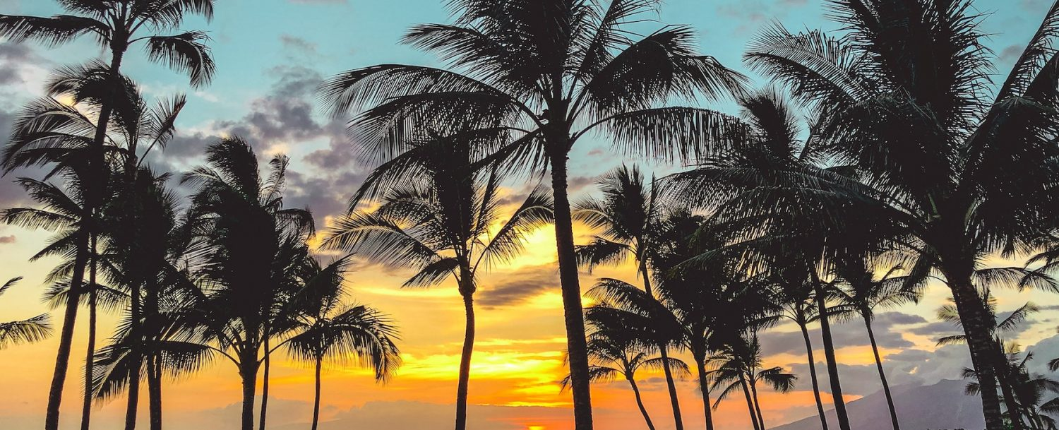 View of the Maui sunset and palm trees